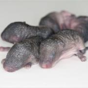 3D Printed Mice